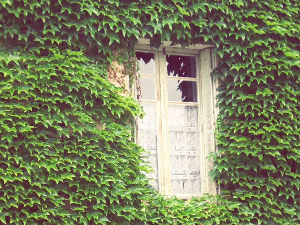 There are eyes on you everywhere you goes wandering Windows Eyeon Greenleaves Closeupshot Catchthemoment Transparency Behind The Veils Deceptively Simple