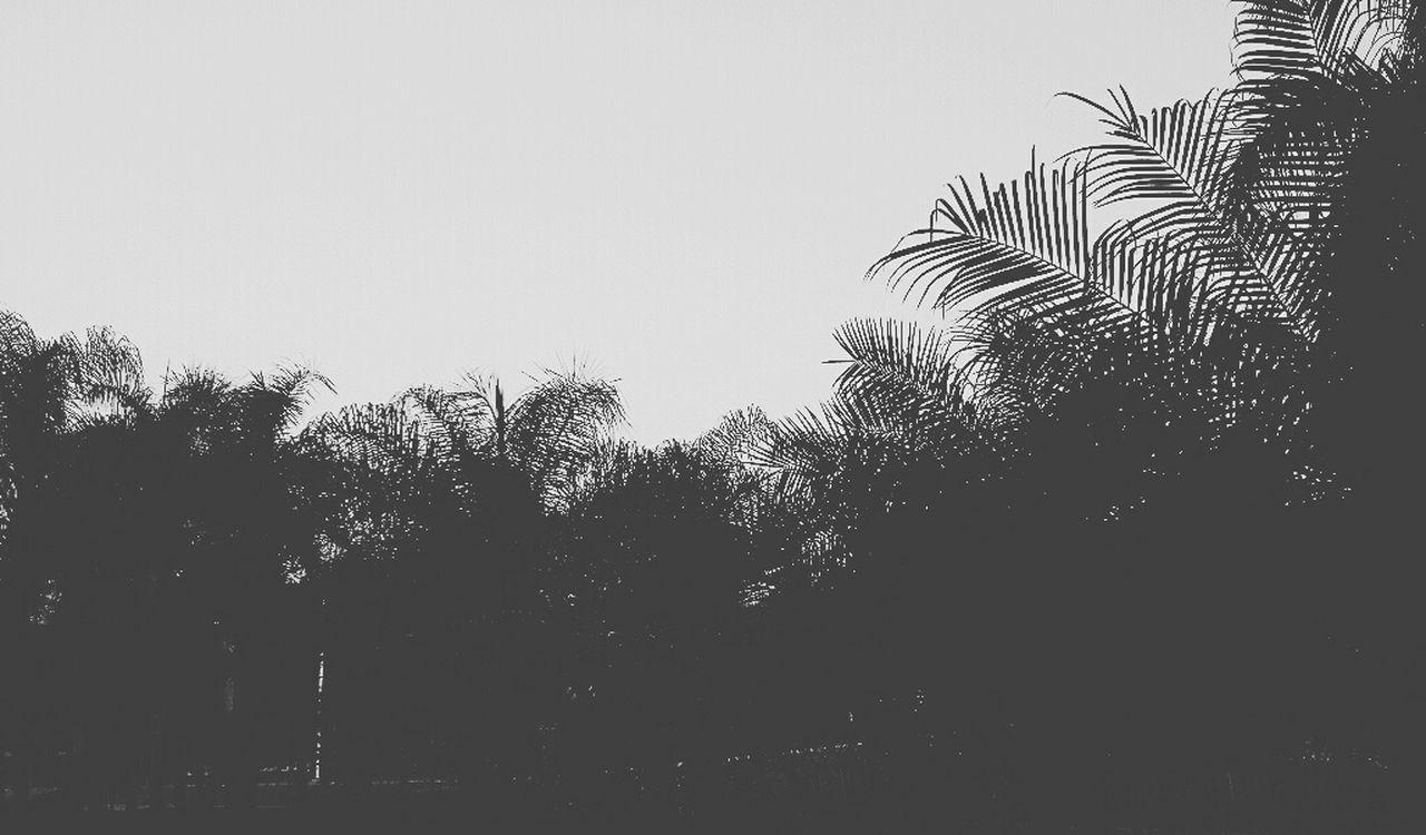 Vengo de aya de un mundo raro Palm Tree No People Nature Black & White Sky Day Outdoors Clear Sky Silhouette Tree Close-up First Eyeem Photo