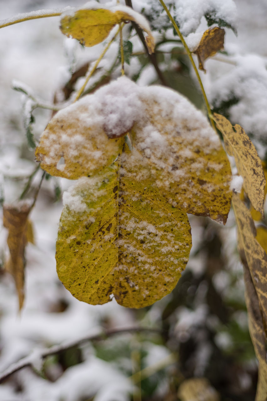 cold temperature, winter, snow, weather, nature, frozen, outdoors, beauty in nature, day, close-up, focus on foreground, growth, ice, tree, tranquility, plant, no people, fragility, branch, catkin, freshness