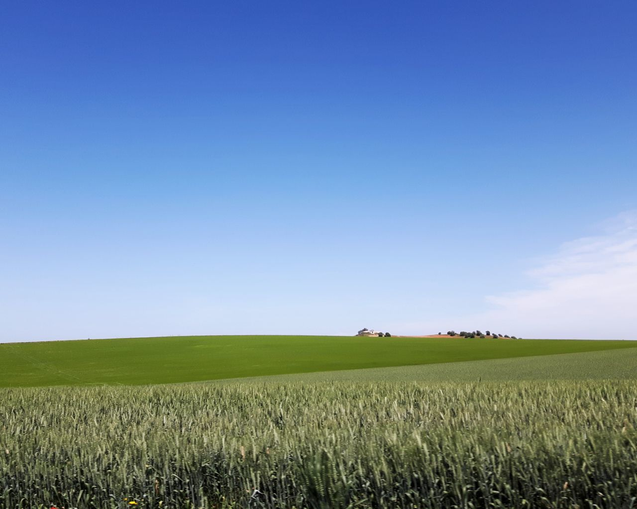 Agriculture Field Crop  Rural Scene Growth Nature Horizon Over Land Tranquil Scene Cereal Plant Sky Scenics Tranquility Environment Outdoors Minimalism Instagramer Umeugram Portugal Alentejo-Portugal