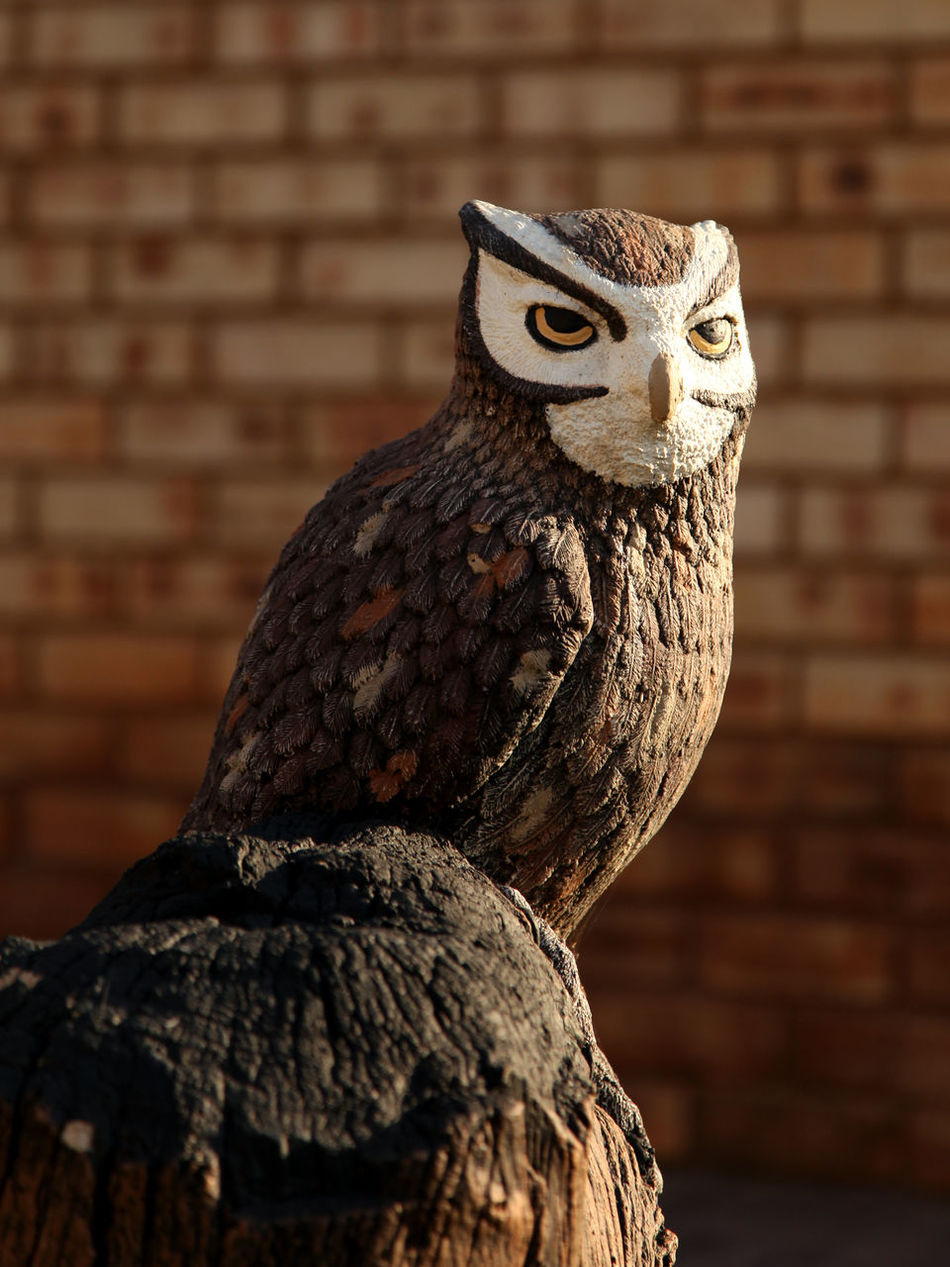 Art Avian Bird Bird Of Prey Bricks Background Close-up Creativity Day Focus On Foreground No People Outdoors Owl Owl Statue Statue Tree Stump