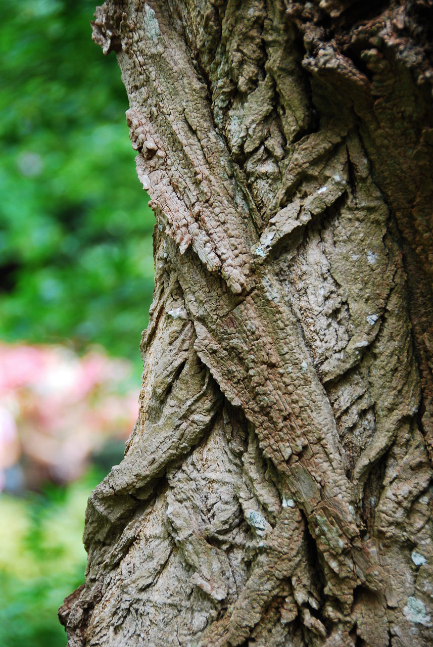 tree trunk, tree, textured, rough, focus on foreground, bark, nature, day, close-up, outdoors, no people, growth, beauty in nature, animal themes