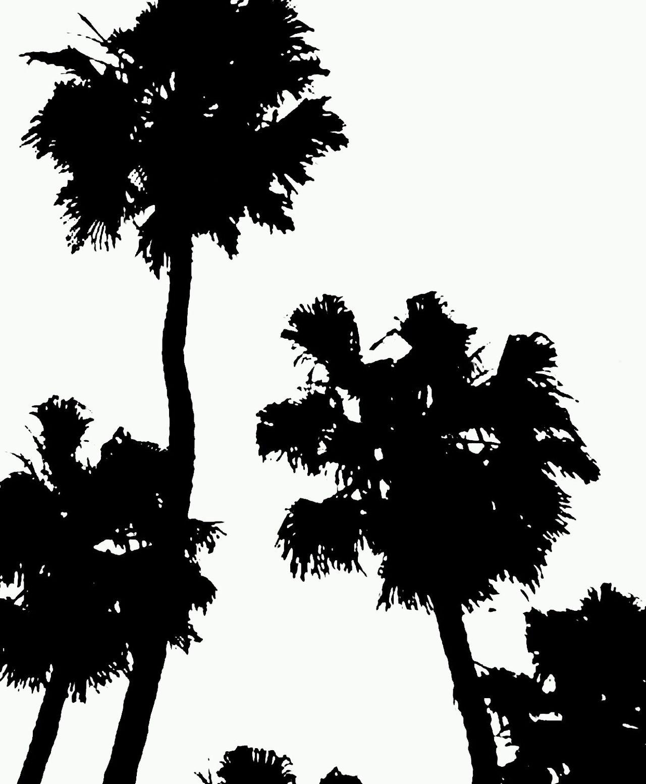Tree Low Angle View Silhouette No People Palm Tree Nature Outdoors Capture The Moment White Black Black & White Blackandwhite Photography Photography Photooftheday EyeEm EyeEmNewHere EyeEmBestPics EyeEm Best Shots Neighborhood Map