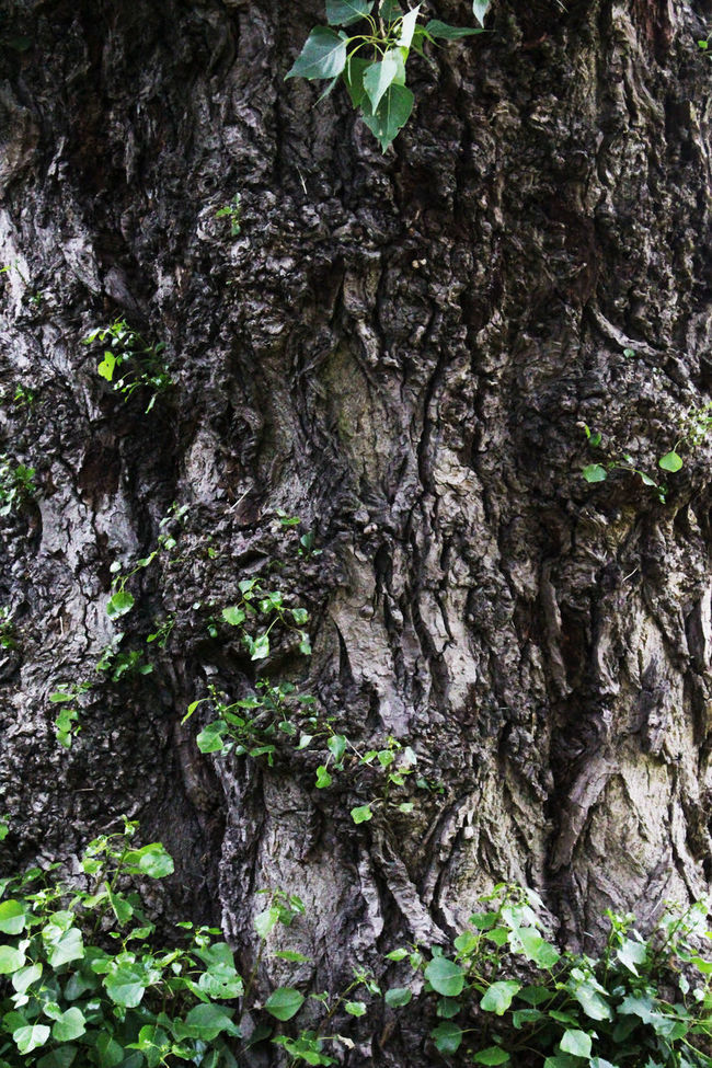 Bark Beauty In Nature Botany Branch Close-up Day Green Green Color Growing Growth Natural Condition Nature No People Non-urban Scene Outdoors Plant Rough Scenics Textured  Tranquil Scene Tree Tree Trunk