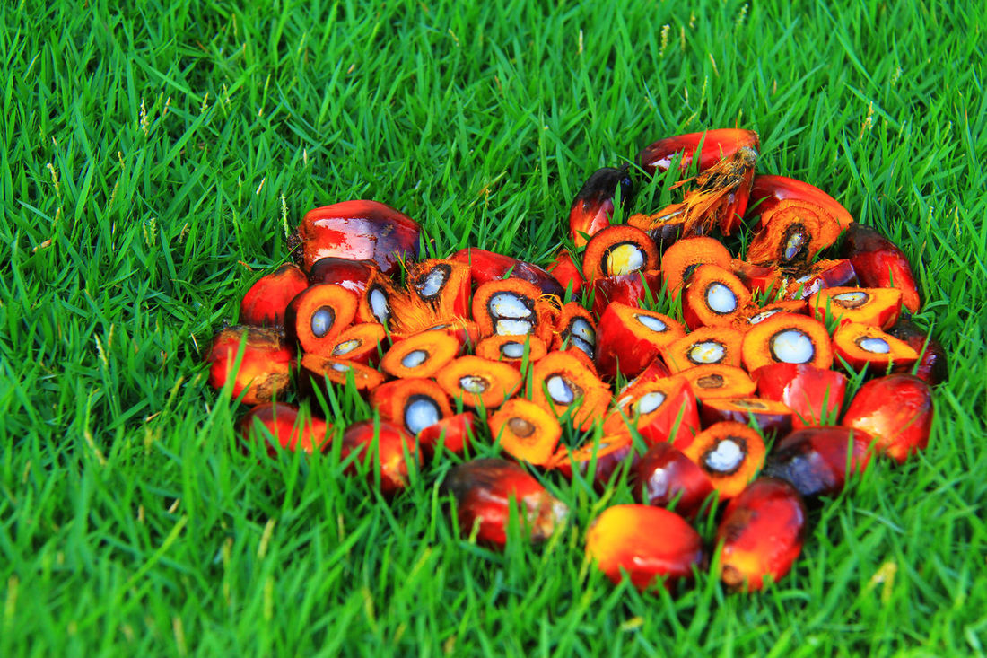 Palm oil is an edible vegetable oil derived from the reddish pulp of the fruit of the oil palms Abstract Agriculture Art Business Concept Design Fruit Gold Colored Idea Kernel Market Oil Oil Background Oil In Nature Oil Industry Oil Spill Oil Splash Palm Oil Palm Oil Fruit Palm Oil Industry Shapes And Forms Shapes In Nature  Splash Vegetable Oil Wallpaper