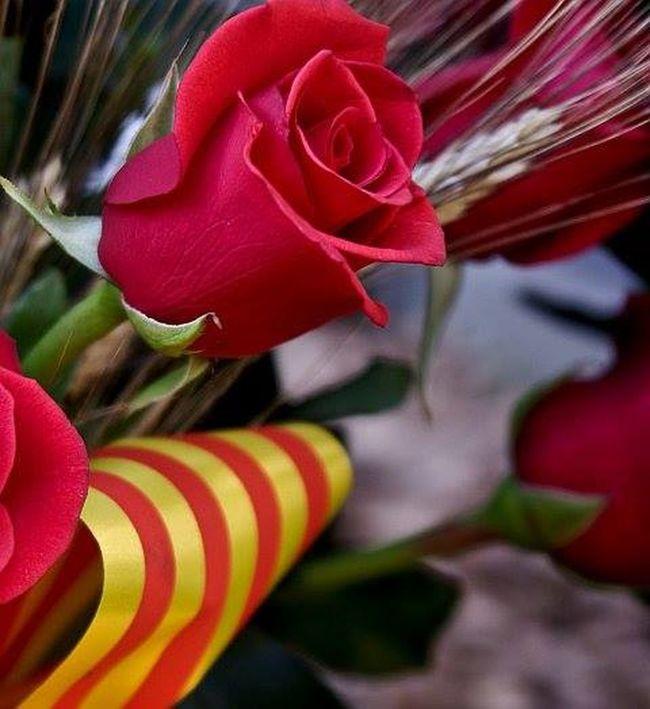 Feliç dia de Sant Jordi , Catalunyaexperience Catalunya Catalunyafotos Catalunyalove Catalunya_color Catalunya Barcelona Catalunya Lliure Catalunyagrafias Catalonia Catalunya_natura Flauers