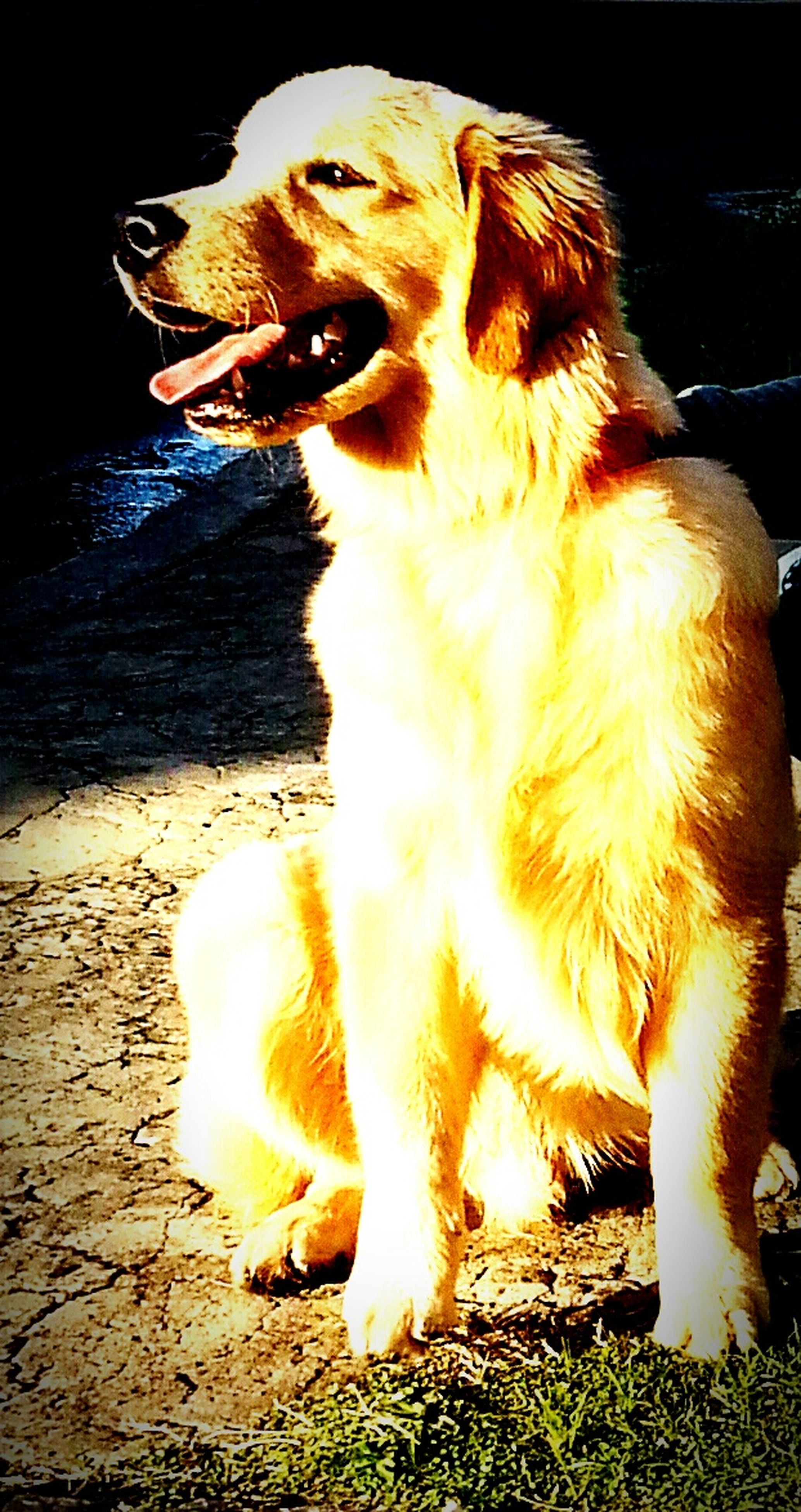 animal themes, one animal, domestic animals, pets, mammal, dog, sitting, sunlight, looking away, close-up, no people, zoology, outdoors, two animals, full length, high angle view, vertebrate, mouth open, day, nature