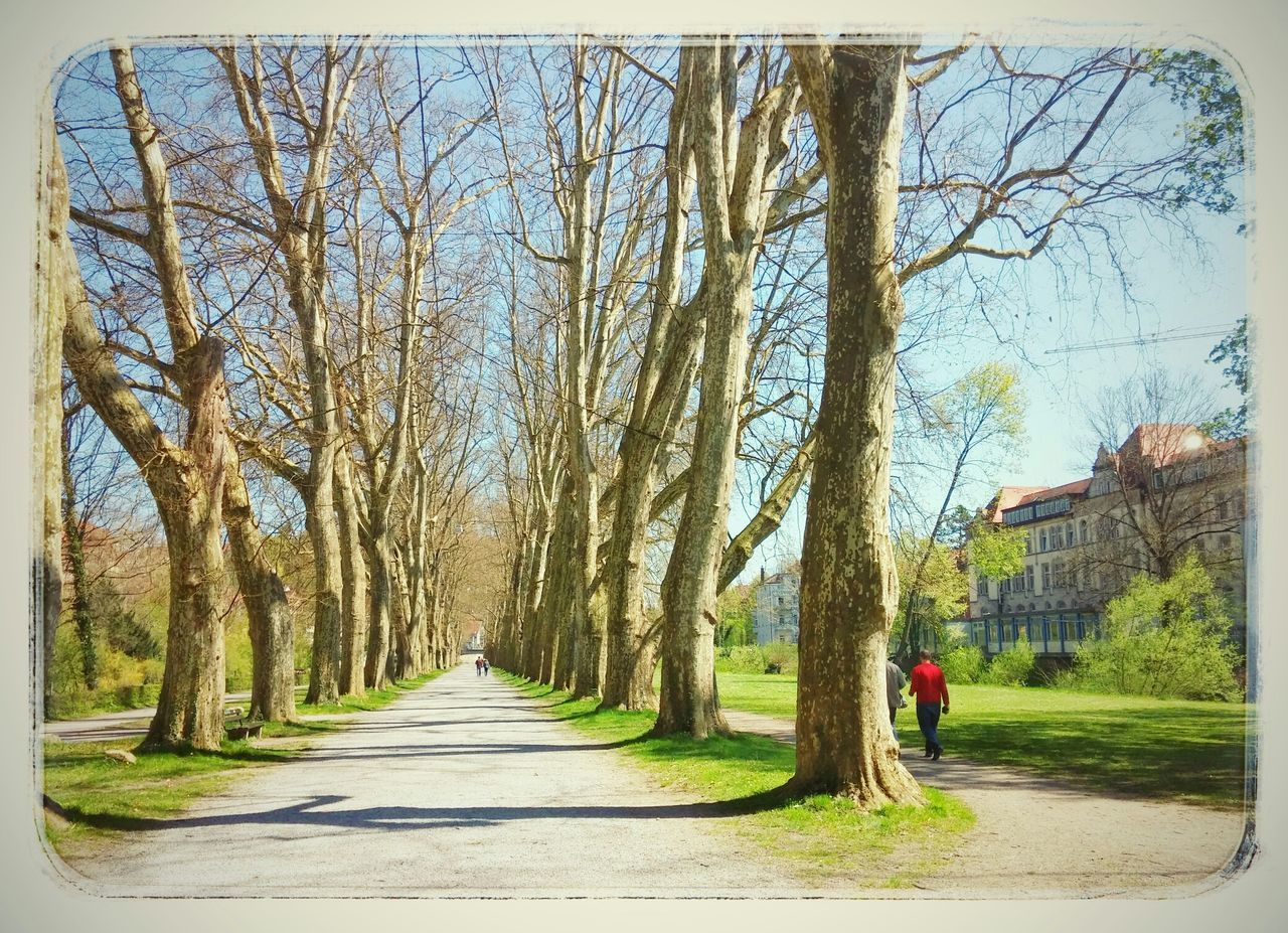 Alley On An Island Neckar Tübingen Hugging A Tree Trees Go For A Walk Lovely Weather Beautiful Day Lemon Lime By Motorola