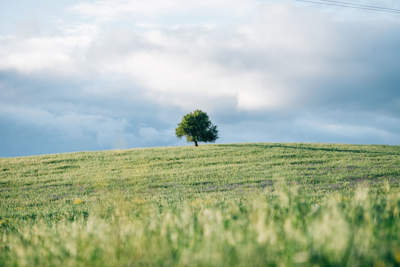 Agriculture Beauty In Nature Cloud - Sky Day Farm Field Freshness Grass Green Color Growth Landscape Lush - Description Nature Nature No People Outdoors Rural Scene Scenics Single Tree Sky Tree Tree