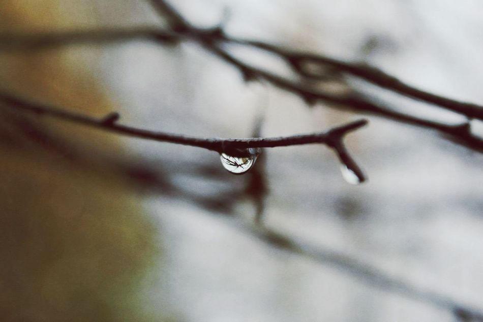 Close-up Nature Branch Beauty In Nature Day Outdoors Norway Raindropshot Rain Drops Rainy Weather