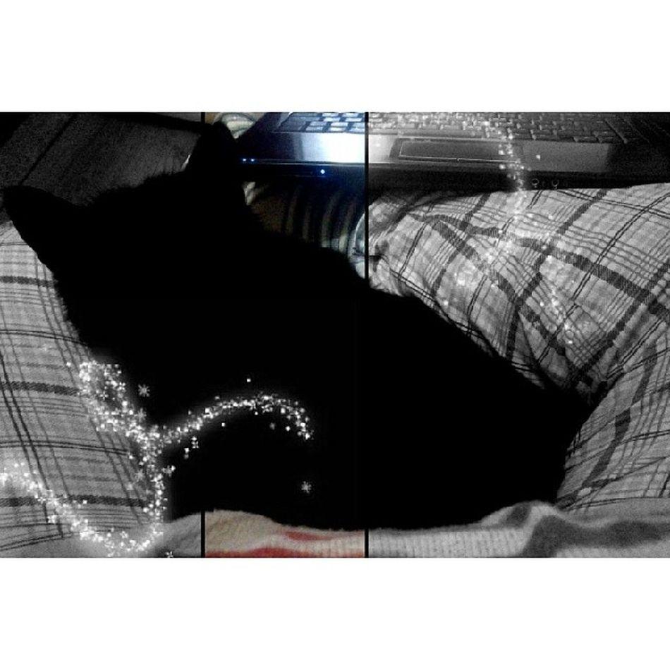 Kedi gibi kedi Oreothecat