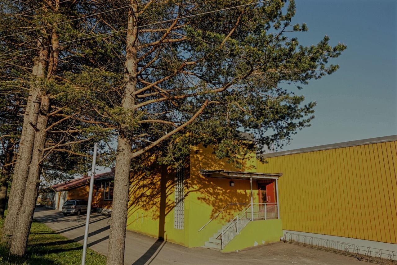 The Architect - 2016 EyeEm Awards Chill Trees And Sky Yellow Summervibe