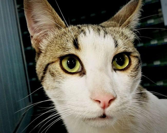Cats Taking Photos Hello World Animals Catlover ♡ Miauuu 😺 Feline Wondering Popular Pets Feline Companions Feline Portraits