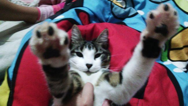 Hello World Mynameissimon Cat♡