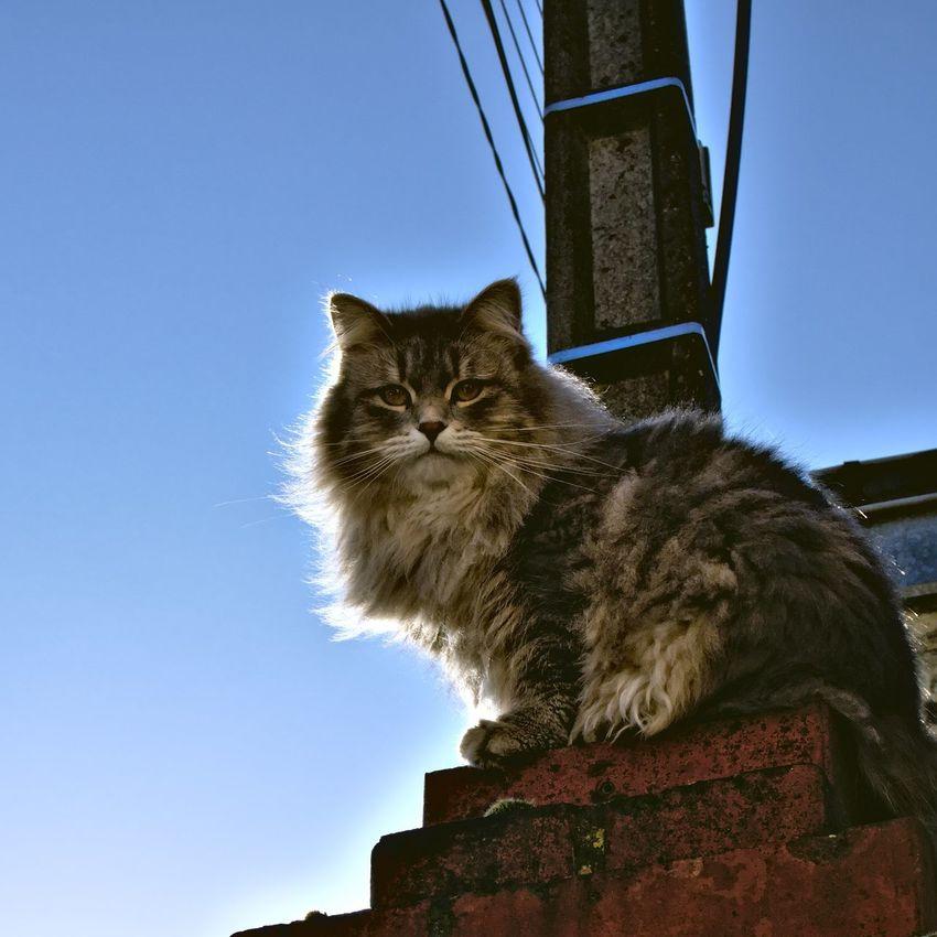 Cat Close-up Contre-jour Curiosity Domestic Animals Domestic Cat Feline Mammal One Animal Pets Whisker