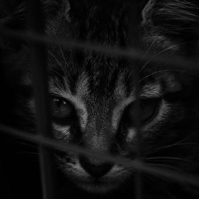 Black White Cat Animallover Animal Bnw Nikon Photography Foto Nikonphotography Gato NoAlMaltratoAnimal Notoanimalcruelty Bw Artistic EyeEm Best Shots Composition Exposure Monochrome_life Bw