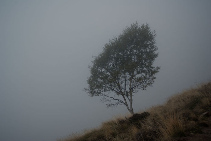 birch tree - foggy weather Bare Tree Beauty In Nature Birch Tree Branch Copy Space Field Fog Foggy Foothill Grass Growth Landscape Meadows Nature Nature Photography Non-urban Scene Outdoors Scenics Sky Tranquil Scene Tranquility Tree Weather