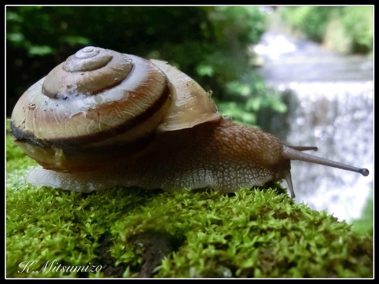 🐌 カタツムリ 蝸牛 Snails Nature Photography Enjoying Life Tadaa Community でんでん虫
