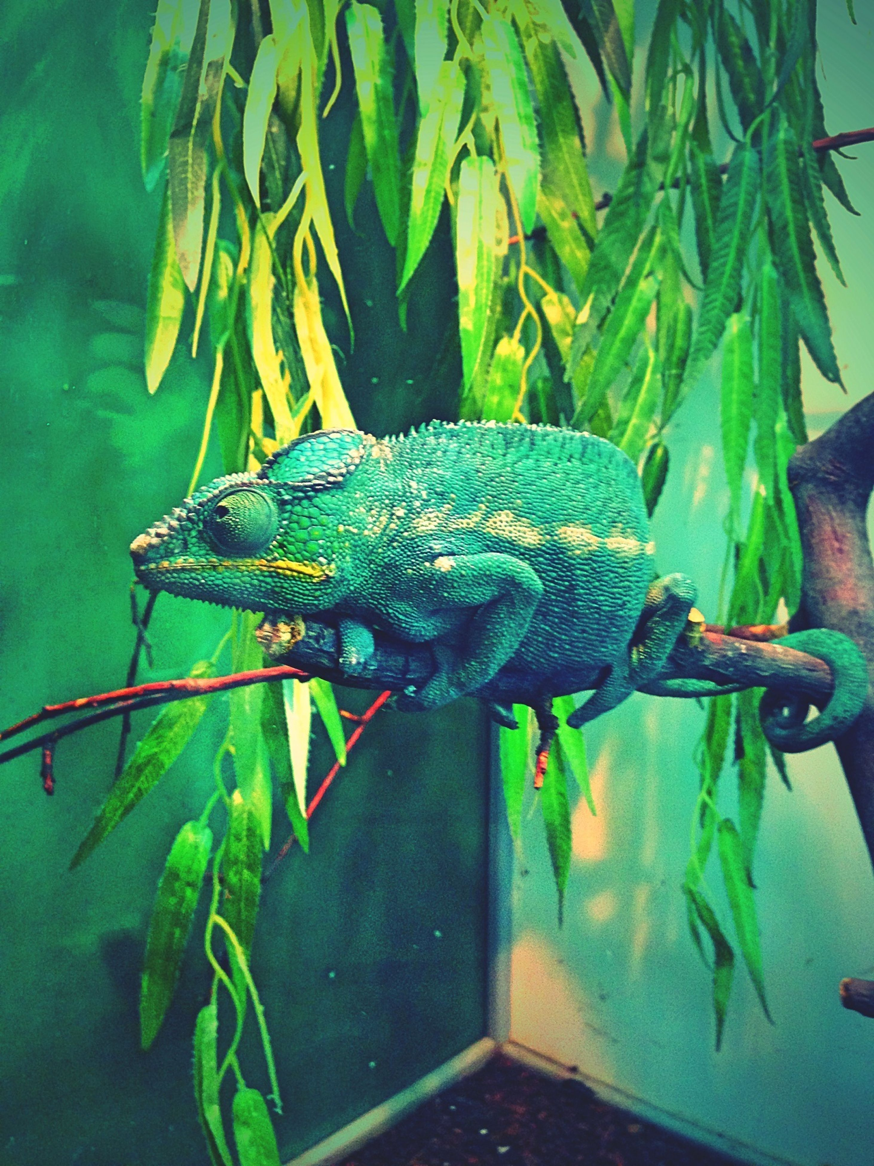 animal themes, animals in the wild, one animal, wildlife, fish, reptile, blue, water, green color, indoors, animals in captivity, nature, close-up, full length, high angle view, no people, day, underwater, sea life