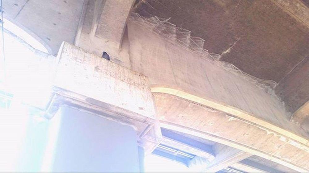 Underneath the bridge... Fremonttroll Bridge Fremont