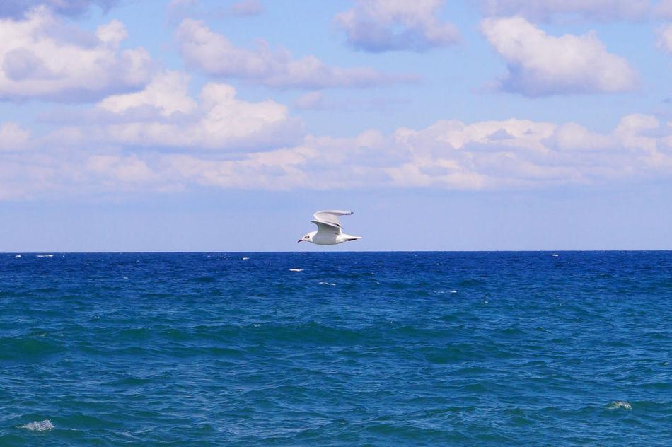 #animal #beach #birds #Blue #colours #fly #Freedom #Nature  #puglia #Pugliacolours #sea #sky #horizon #cloudporn #sun Animal Themes Beauty In Nature Cloud - Sky Horizon Over Water Nature Outdoors Sky Water EyeEmNewHere