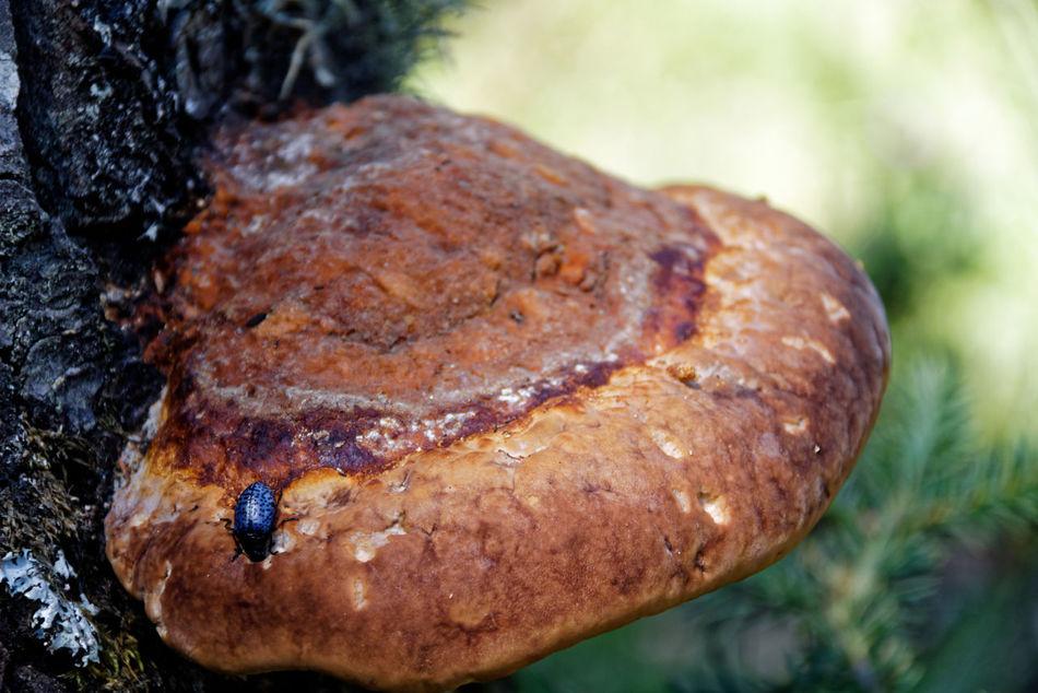 Mushroom Brown Close-up Focus On Foreground Mushroom Mushrooms Nature Outdoors Selective Focus Tree Trunk