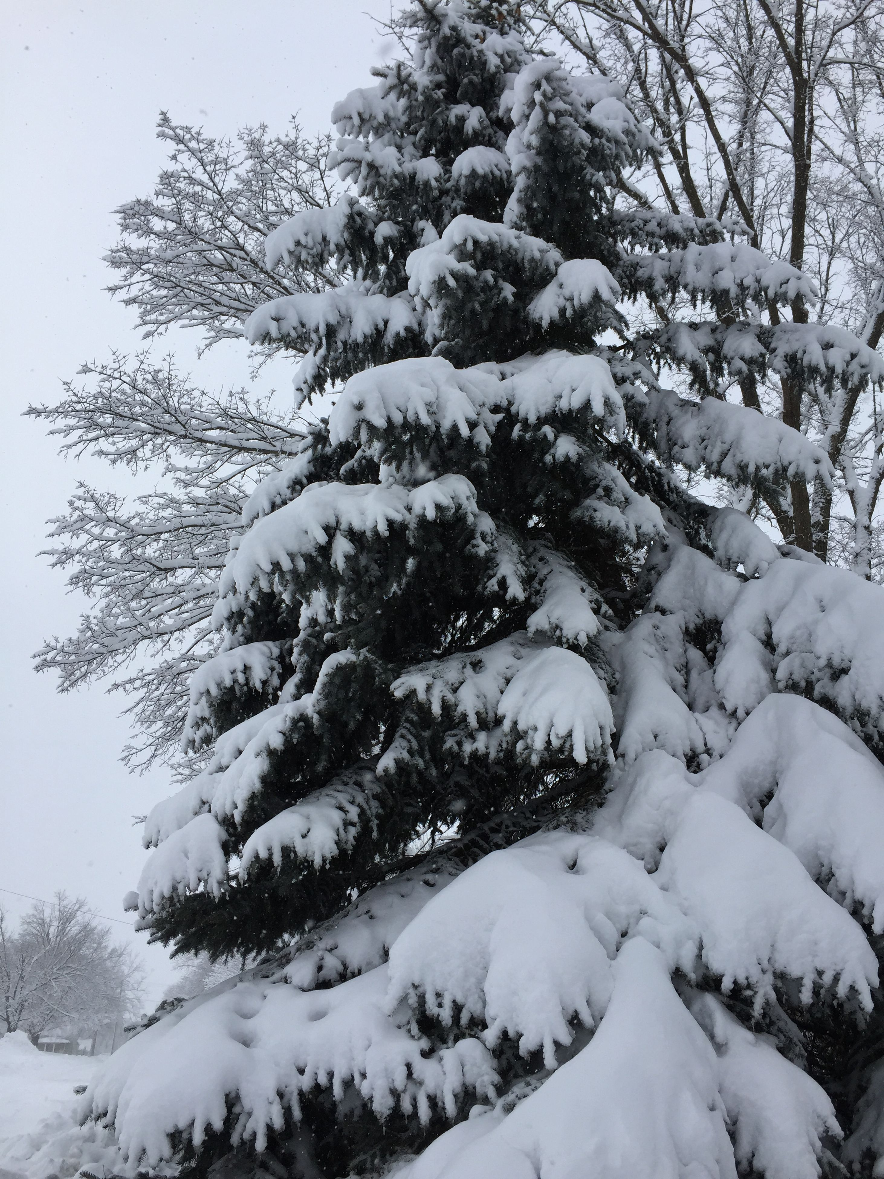 winter, snow, cold temperature, season, tree, weather, frozen, tranquility, nature, branch, beauty in nature, covering, tranquil scene, white color, scenics, growth, day, outdoors, bare tree, low angle view