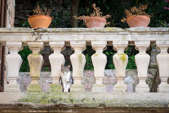 Todi, Perugia, Italy Todi  Perugia Italy Cat MedievalTown Travel Photography