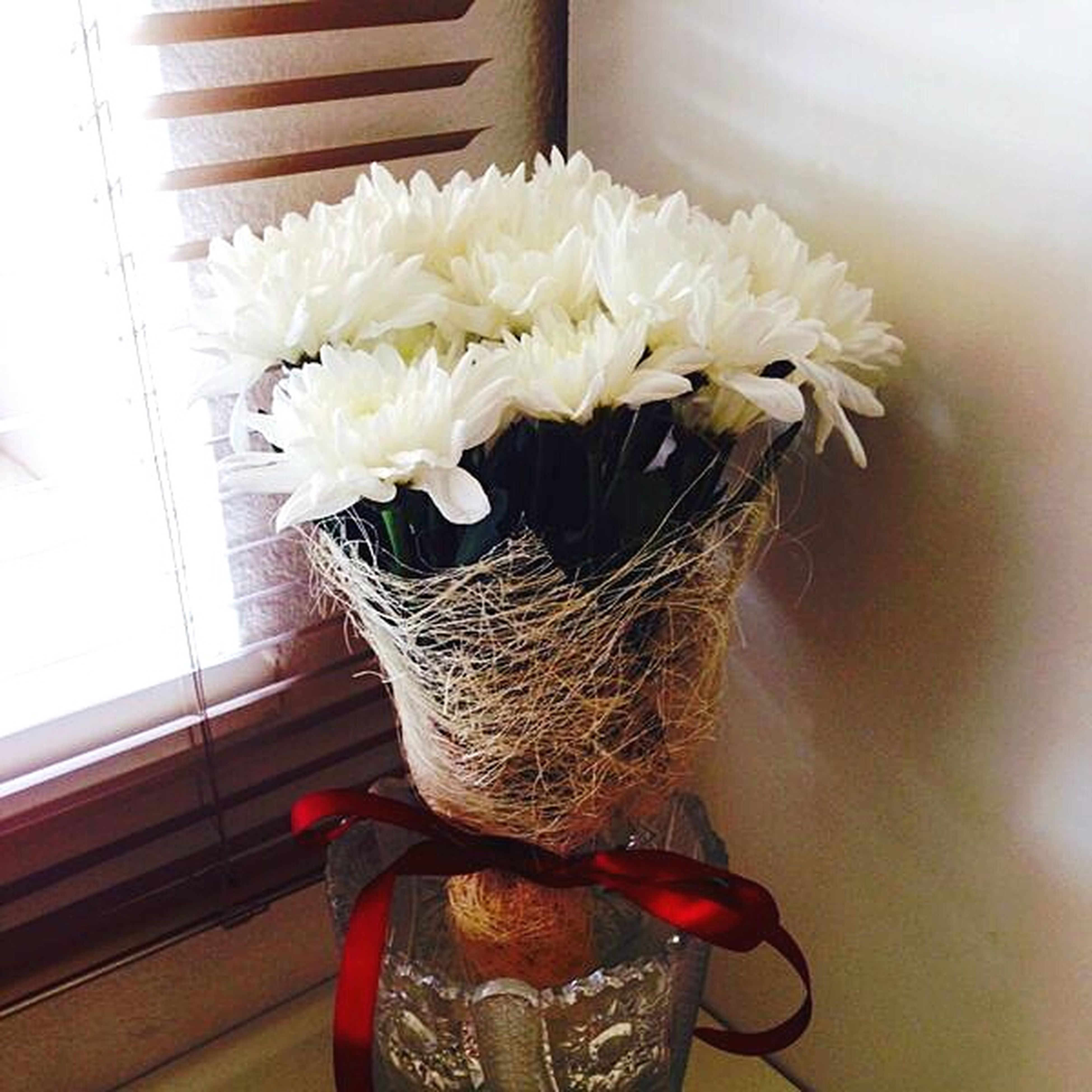 flower, indoors, vase, home interior, white color, fragility, flower head, petal, freshness, wall - building feature, close-up, table, no people, white, potted plant, flower arrangement, wall, softness, single flower, window sill