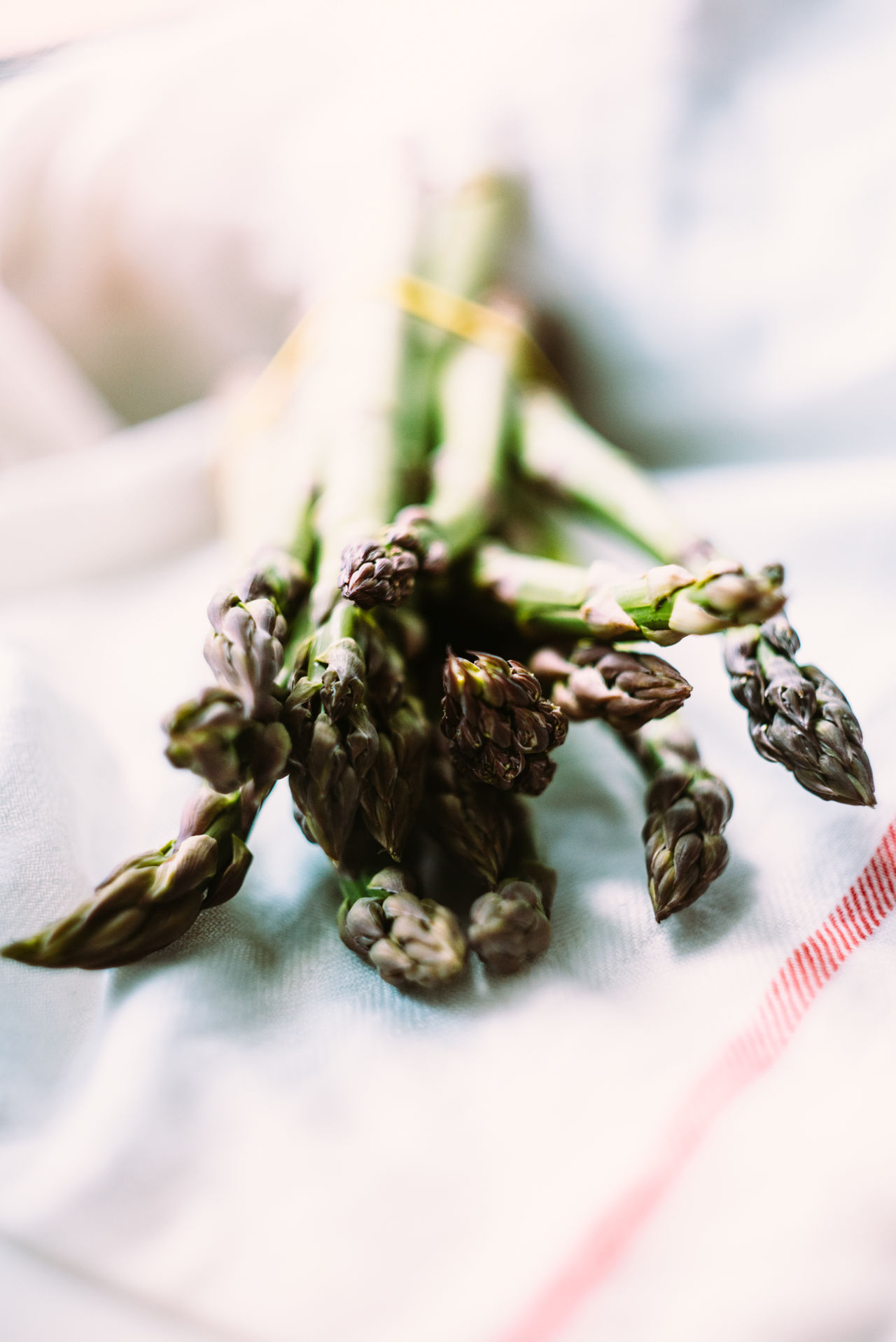 Asparagus Asparagus Season Close-up Day Dried Plant Food Freshness Healthy Eating Herb Herbal Medicine Nature No People Vitamin