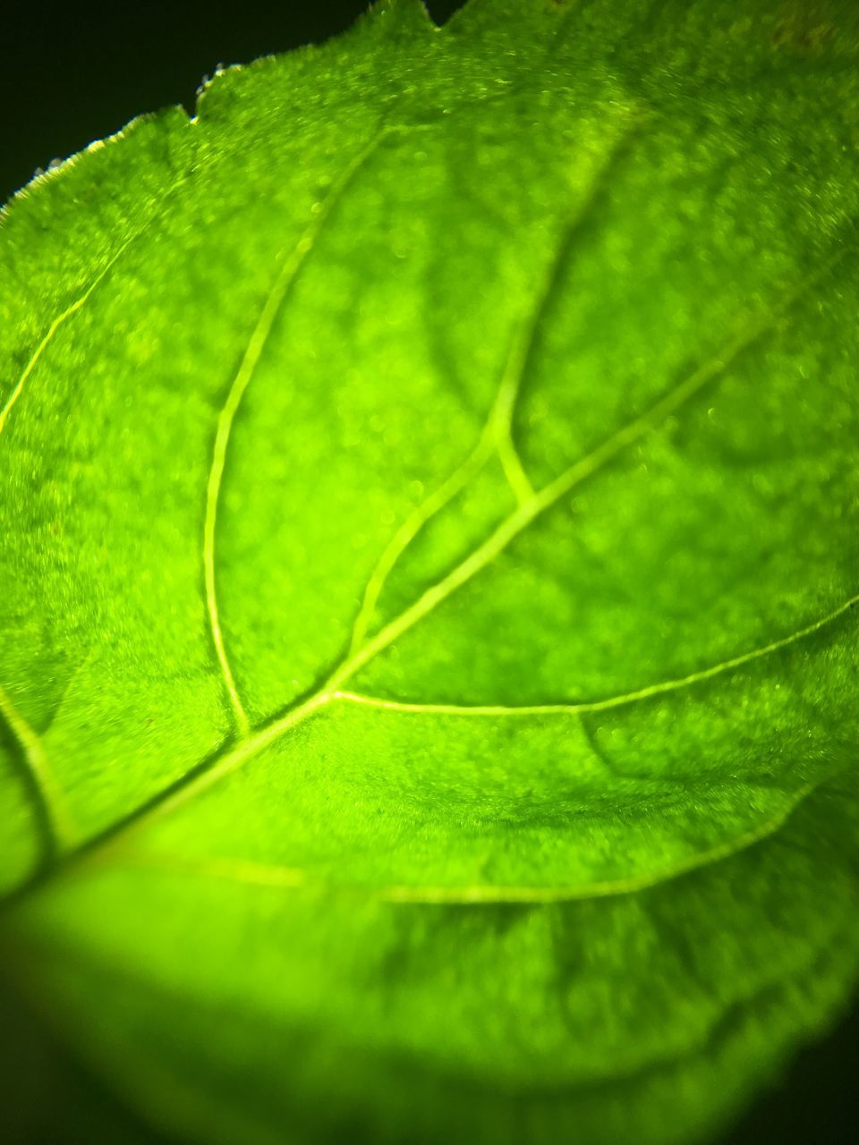 leaf, green color, close-up, freshness, nature, growth, backgrounds, no people, plant, full frame, beauty in nature, day, outdoors, fragility