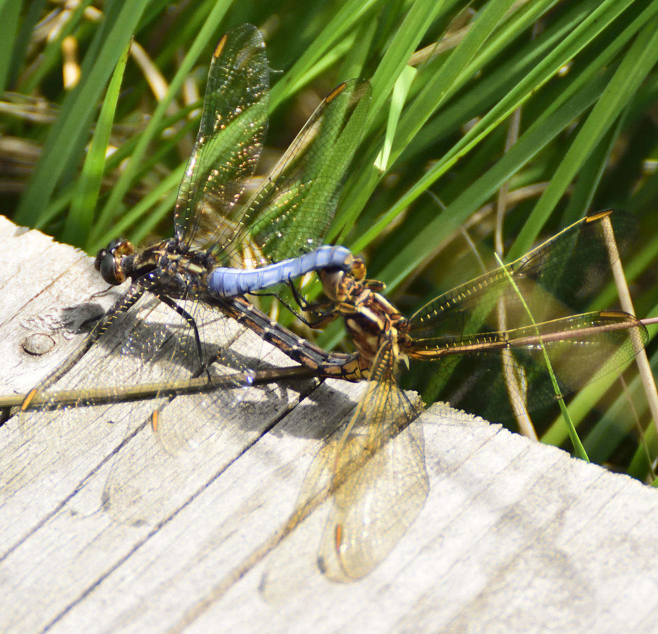 animal themes, animals in the wild, insect, one animal, animal wildlife, wildlife, day, outdoors, nature, close-up, no people