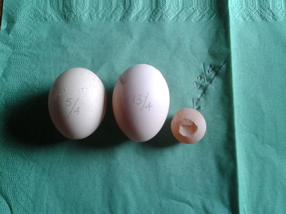 "the art and frequence of ""egg-laying"" Surprise Eggs #amlp"