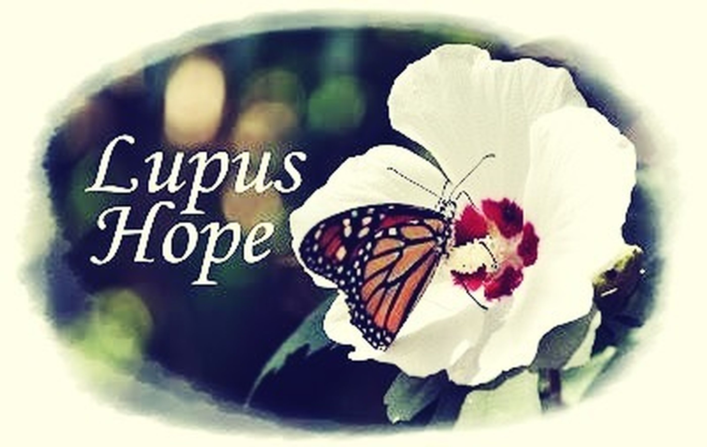 Supporting Lupus Lupus Awareness Purple Ribbon Butterfly