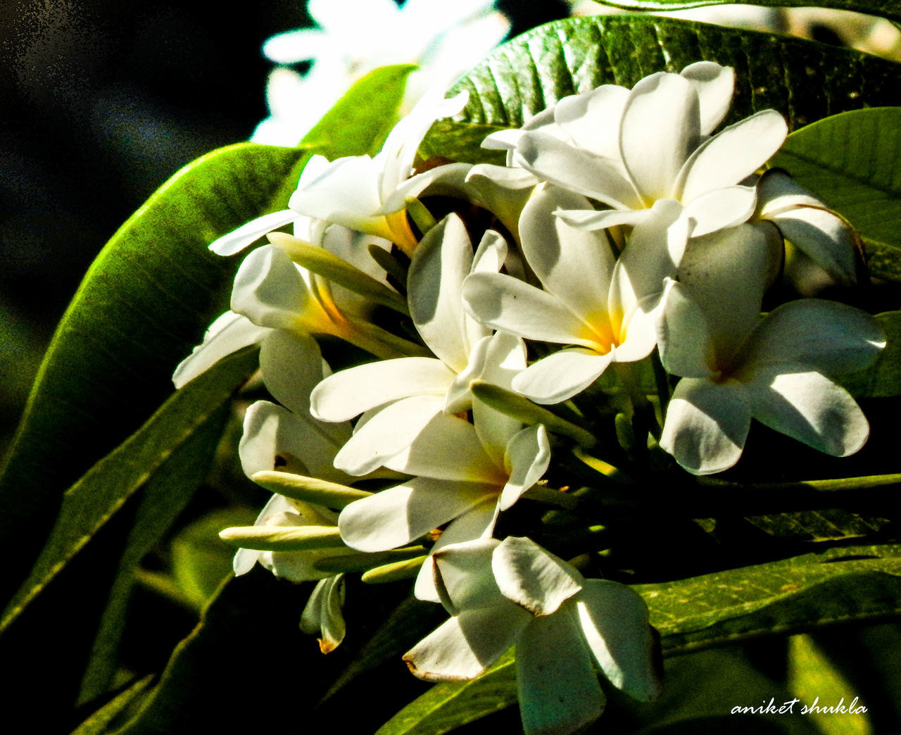 flower, growth, petal, plant, beauty in nature, nature, freshness, fragility, flower head, no people, leaf, close-up, day, outdoors, blooming
