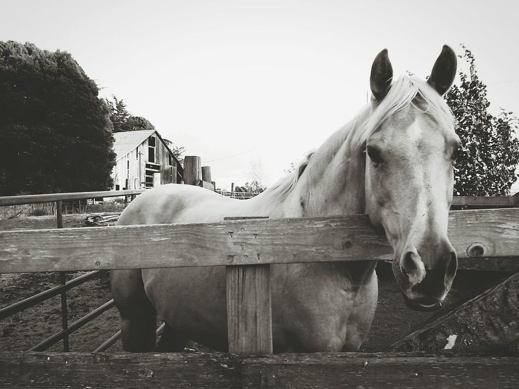 ~My sweet Tardy boy~ Old Pic - New Edit Horse Life My Horse❤ Country Life Black & White The Great Outdoors Beautiful Nature Home Sweet Home Ranch Life Farm Animals My Happy Place  Taking Photos From My Point Of View