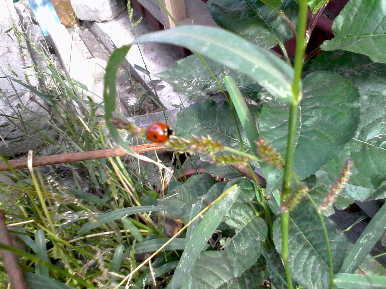 Green Plants Ladybeetle Ladybug Grass Unedited Wolfzuachis Eyeem Market