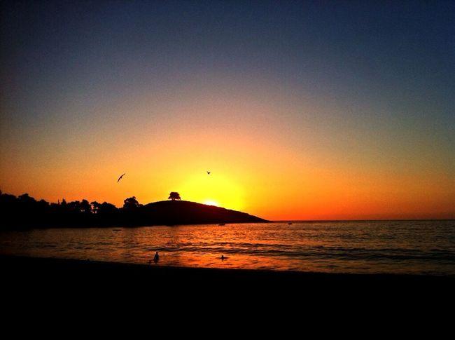 Sunset ???? Enjoying The Sun Summerismagic Zapallar EyeEm Sunset Silhouettes Taking Photos Paisaje Natural Summer