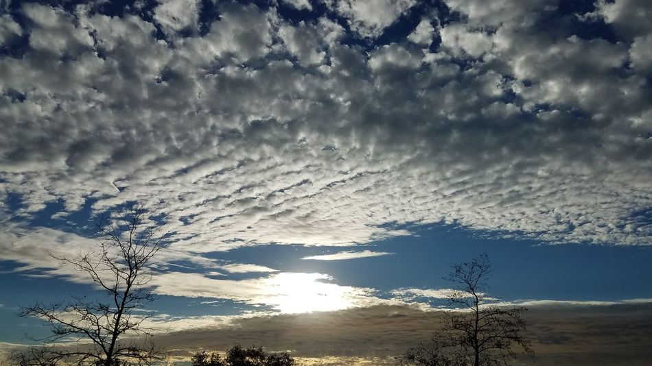 nofilternoeditNofilters Nature Beauty In Nature Cloud - Sky Sky No People Sunset Backgrounds Tree Outdoors Day Beautiful Blue Sky Popular EyeEm Best Shots Blue Nature_collection EyeEmBestPics EyeEm Nature Lover California