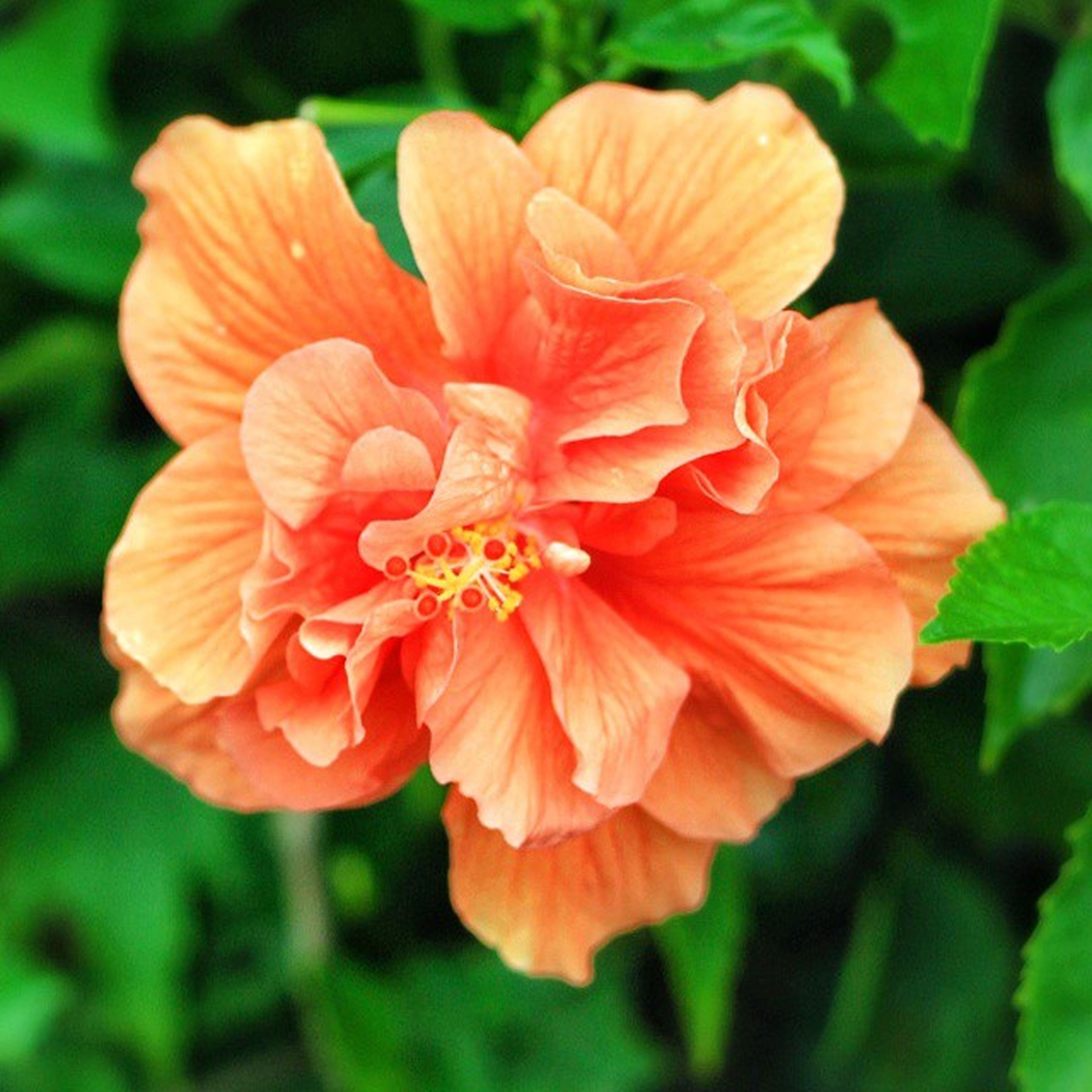 flower, petal, freshness, flower head, fragility, growth, beauty in nature, close-up, focus on foreground, blooming, nature, orange color, single flower, plant, park - man made space, in bloom, day, outdoors, no people, blossom