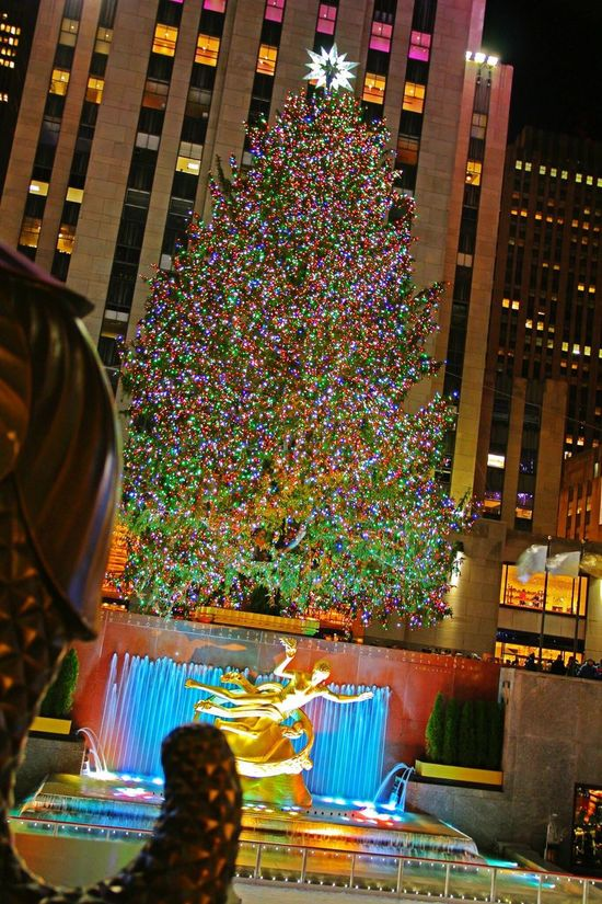 The Culture Of The Holidays New York New York City Christmas Tree Christmas Lights Christmas Around The World Rockefeller Center Rockefeller Center, New York Christmas Decorations Rockefeller Plaza Rockefeller Center Christmas Tree USA EyeEm Best Shots EyeEm Gallery Nyc Winter