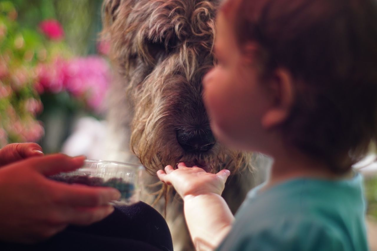 Willi and Greta❤️ Togetherness Friendship Enjoyment Bonding Happiness Dogs Of EyeEm Willi The Wolfhound Irish Wolfhound Hello World Have A Nice Day♥ One Animal Outdoors Animal Themes Girls Domestic Animals Child Fruitsnacks Treats For Myself