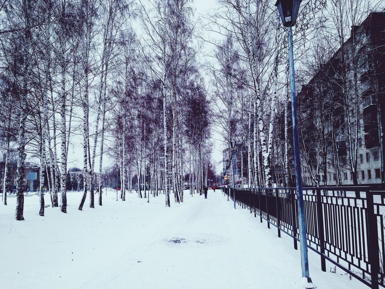 winter, snow, cold temperature, weather, tree, nature, bare tree, outdoors, tranquility, day, beauty in nature, frozen, no people, scenics, sky