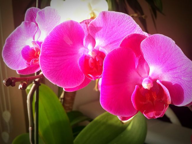 Turkey Flowers Colors Orchids EyeEm Best Shots