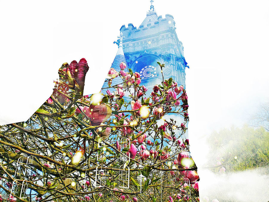 Beautiful Cardiff decorated with Bath's Botanical Garden magnolias . Bath Cardiff Double Exposure Low Angle View Magnolia Pink Magnolia The Innovator Tree