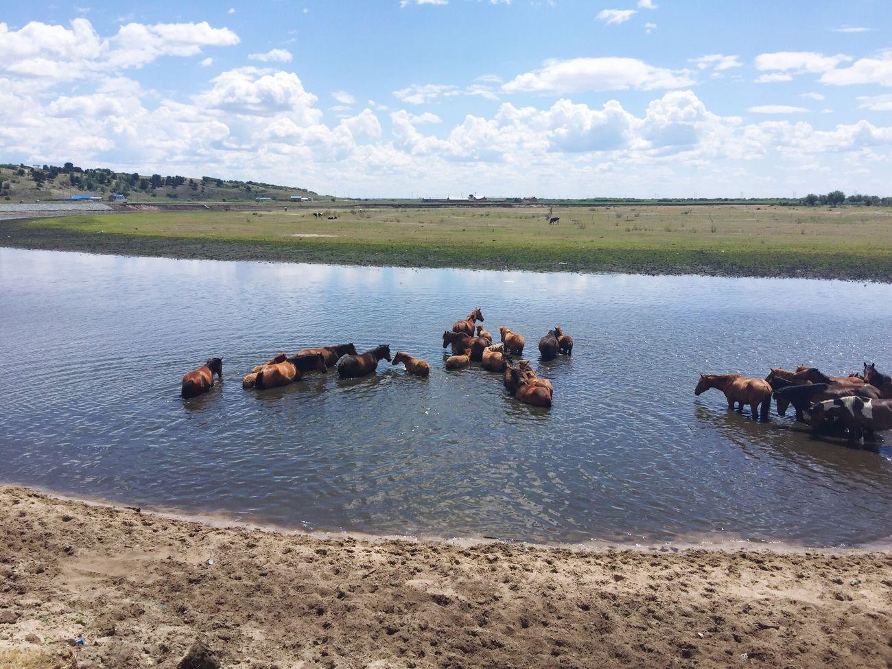 草原与野马 Glassland Fury Horse Hometown