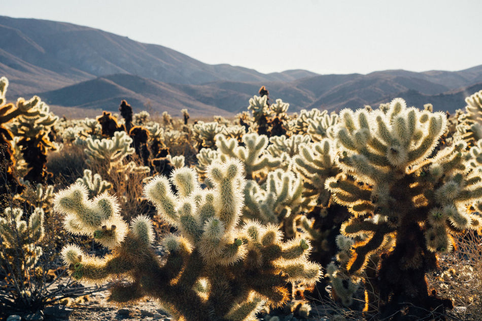 Beauty In Nature Cactus Day Growth Mountain Nature No People Outdoors Plant