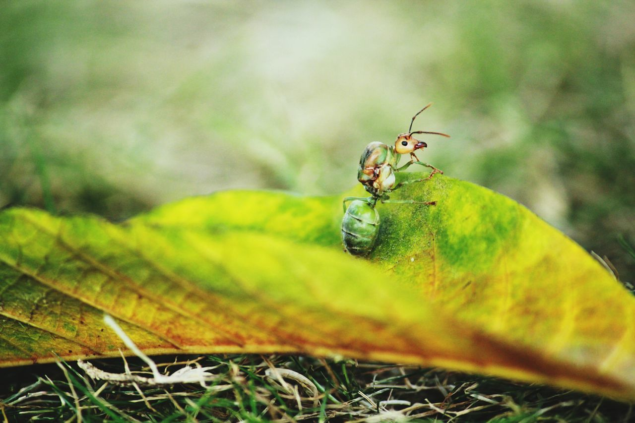 animal themes, insect, animals in the wild, one animal, leaf, close-up, green color, nature, no people, animal wildlife, day, outdoors, plant, beauty in nature, grass