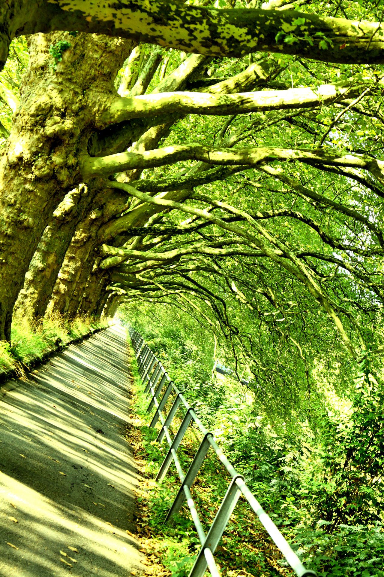 Day Energy Green Color Growth Nature No People Outdoors Walking Path