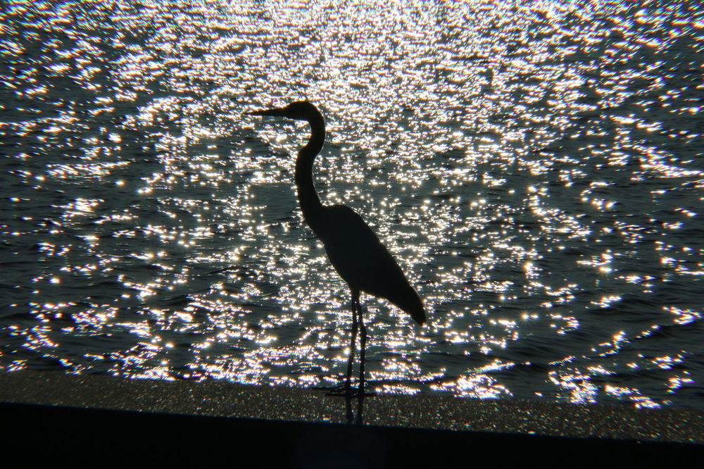 Animal Themes Animals In The Wild Bird No People Outdoors Beauty In Nature Water Nature Tree Sky Day Heron Backlighting Photography Mississippi USA
